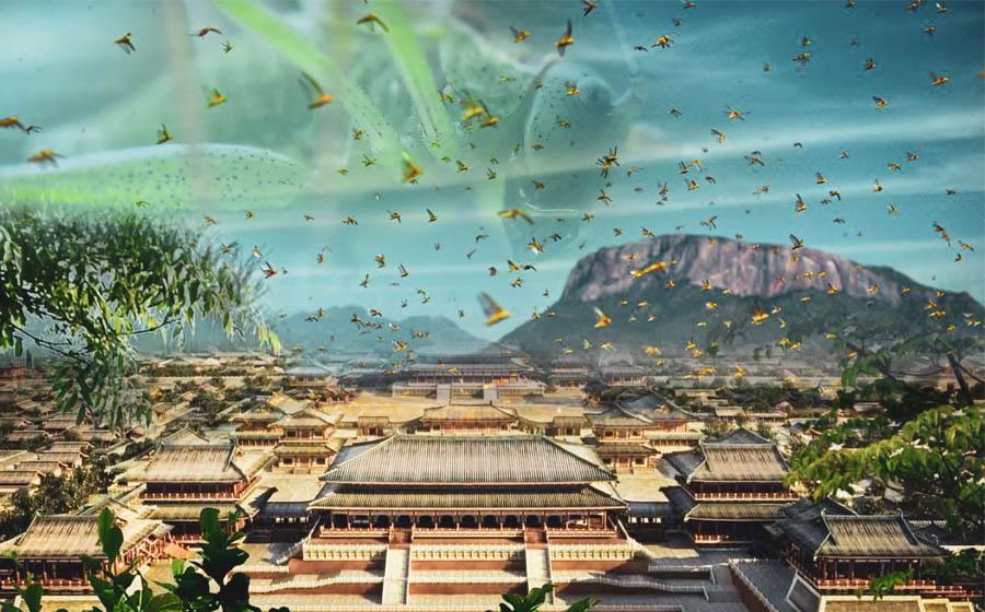 Amid Coronavirus Pandemic, China Faces Plague of Locusts